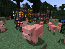 The piggy mayhem.