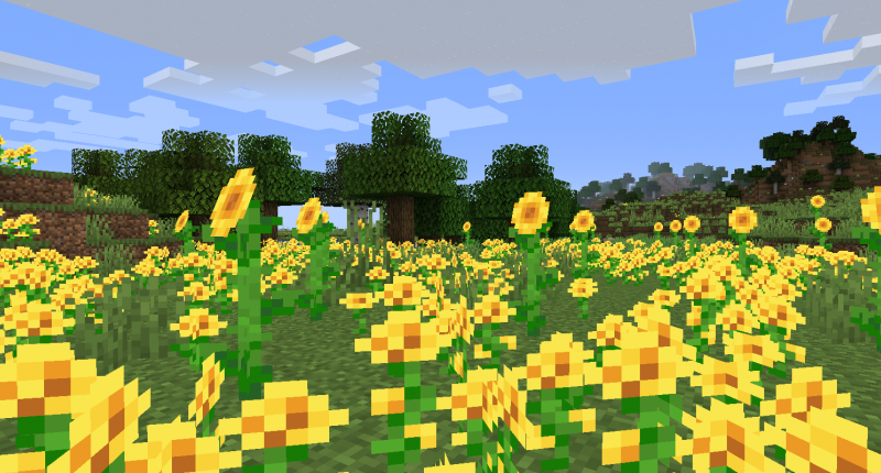 A field of yellow blooms