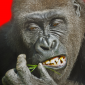 Profile picture for user Flying Gorilla Games TM